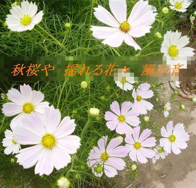 P9150111.jpg
