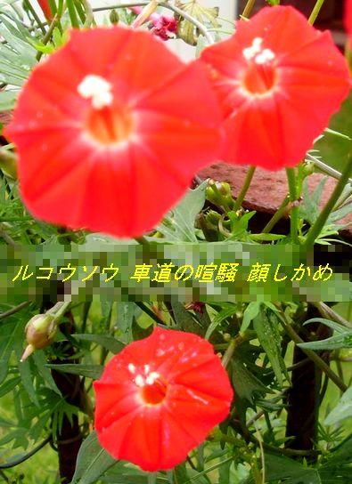 P9190135.jpg